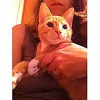 Adopt A Pet :: Milo - Kirkwood, DE