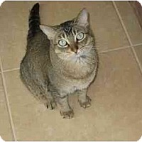 Adopt A Pet :: Simba - Fort Lauderdale, FL