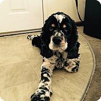 Adopt A Pet :: George - Toledo, OH
