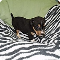 Adopt A Pet :: Leo in CT - Manchester, CT