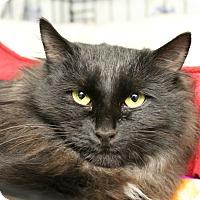 Adopt A Pet :: Bonnie - Warwick, RI