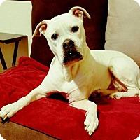 Adopt A Pet :: Mango - Tucson, AZ