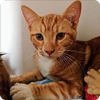 Adopt A Pet :: Cutie - Riverside, CA