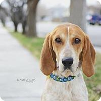 Adopt A Pet :: Johnson - Salt Lake City, UT