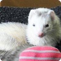 Adopt A Pet :: Tucker - Hartford, CT