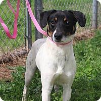 Adopt A Pet :: Jax in Shreveport, LA - Austin, TX