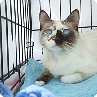 Adopt A Pet :: Heather - Berkeley, CA