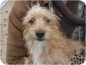 Terrier (Unknown Type, Small) Mix Dog for adoption in Kingsburg, California - Rowdy