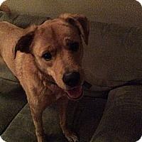 Adopt A Pet :: Izzy - Georgetown, KY