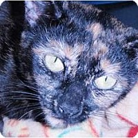 Adopt A Pet :: Camille - Pasadena, CA