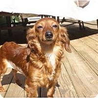 Adopt A Pet :: Sally - Raleigh, NC