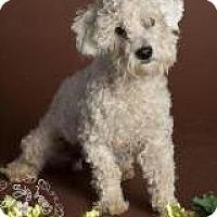 Adopt A Pet :: Fife - non shed! - Phoenix, AZ