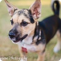 Adopt A Pet :: Ansel Adams - Scottsdale, AZ