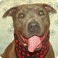 Adopt A Pet :: Steel - Cincinnati, OH