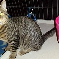 Adopt A Pet :: Butch - Iroquois, IL