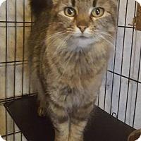 Adopt A Pet :: Mona - Bridgeton, MO