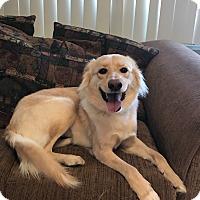 Adopt A Pet :: Evie - Garden City, MI