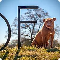 Adopt A Pet :: Amanda - Kinston, NC