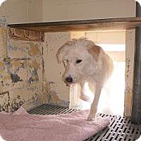Adopt A Pet :: Shaggy - Wallaceburg, ON