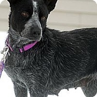 Adopt A Pet :: Lucy - Delano, MN