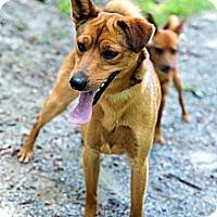 Adopt A Pet :: Spenser - Tinton Falls, NJ