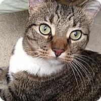 Adopt A Pet :: Sammi - Laguna Woods, CA