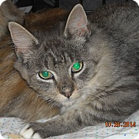 Adopt A Pet :: Anthony - Riverside, RI