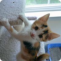 Adopt A Pet :: Daisy - Port Republic, MD
