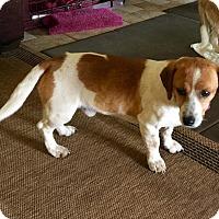 Adopt A Pet :: Sonny - Norman, OK