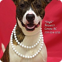 Adopt A Pet :: Jingle - Newnan City, GA