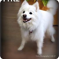 Adopt A Pet :: Fritz - Elmhurst, IL
