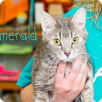 Adopt A Pet :: Emerald - Somerset, PA