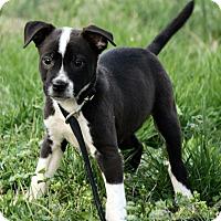 Adopt A Pet :: Lennon - Plainfield, CT
