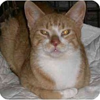 Adopt A Pet :: Chester - Lombard, IL