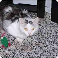 Adopt A Pet :: Harrison - Jeffersonville, IN