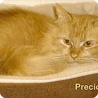 Adopt A Pet :: Precious - Medway, MA