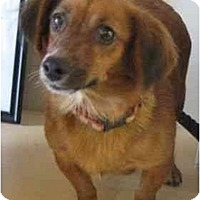 Adopt A Pet :: Sally - San Jose, CA