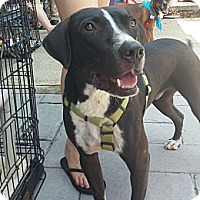 Adopt A Pet :: Chubbs - Knoxville, TN