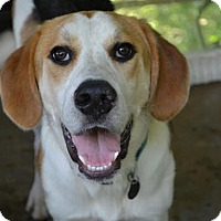 Adopt A Pet :: Biggs - Knoxville, TN