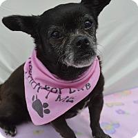 Adopt A Pet :: Mousie - Aurora, CO