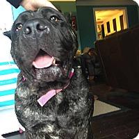 Adopt A Pet :: Libby-OH - Virginia Beach, VA