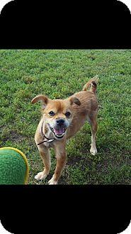 Terrier (Unknown Type, Medium) Mix Dog for adoption in Indianola, Iowa - Buddy