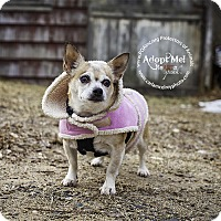Adopt A Pet :: Junebug - East Hartford, CT