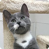 Adopt A Pet :: Akela - Durham, NC