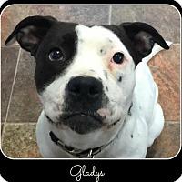 Adopt A Pet :: Gladys - Memphis, TN