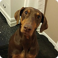Adopt A Pet :: Rayna - Richmond, KY