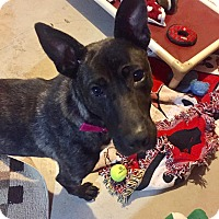 Adopt A Pet :: Duchess - Frankfort, IL