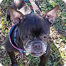 Adopt A Pet :: McGee