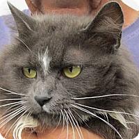 Adopt A Pet :: Santana - Germantown, MD