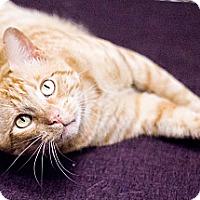Adopt A Pet :: Mister Balz - Chicago, IL